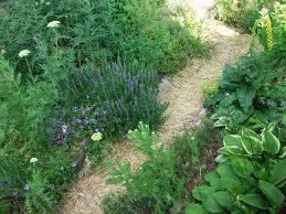 jak pestujeme byliny