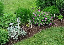 krasne bylinky v nasich zahradach