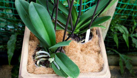 Orchideje nesnáší přemokření.