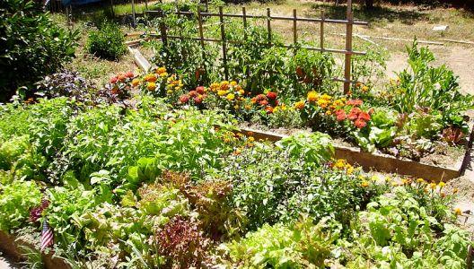 Dodejte rostlinám na zahradě potřebné živiny a minerály